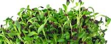 WA/OR salmonella outbreak traced to sprouts