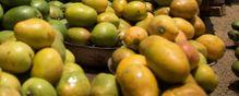 Mango Salmonella Outbreak in California, Washington state