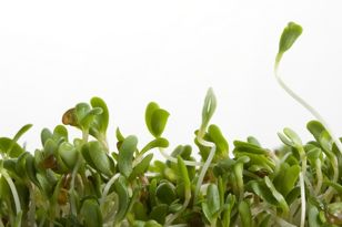 Sprouts can harbor E. coli and other pathogens.